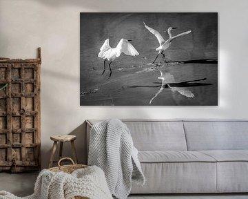 Vogelvlucht von Emil Golshani
