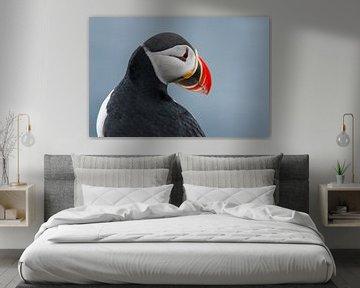 Papageientaucher von Gert Hilbink