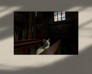 Poes in kerkbank