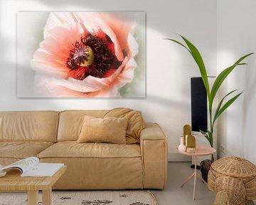 Coquelicot Rosé (rosa Mohn) von Yvonne Blokland