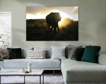 Olifant Silhouet  von Erik van Leyden