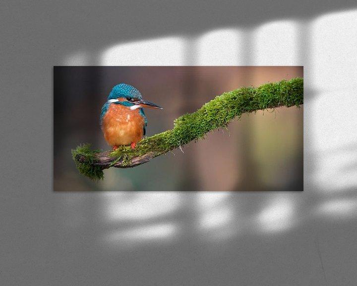 Sfeerimpressie: IJsvogel van IJsvogels.nl - Corné van Oosterhout