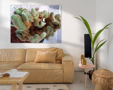 Kamerplant: SciFi Cactus 1-3 van MoArt (Maurice Heuts)