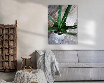 Kamerplant: Aloe Vera 2-1 van MoArt (Maurice Heuts)