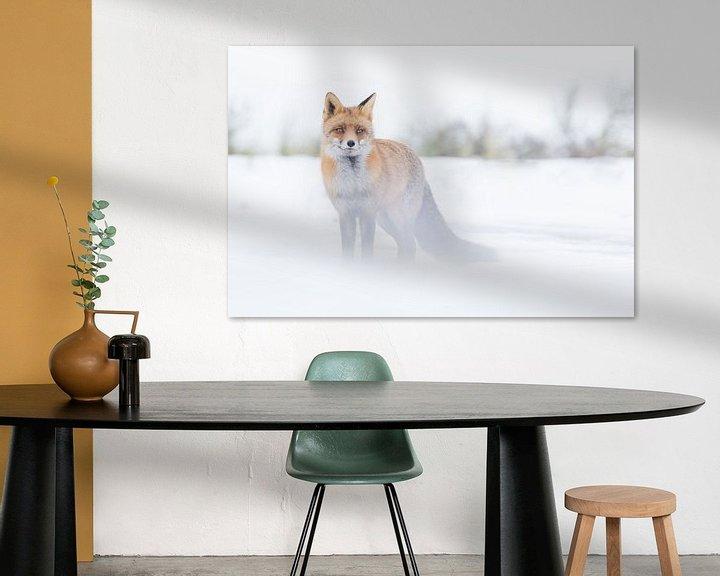 Sfeerimpressie: Vos in de Sneeuw van Jeffrey Haak