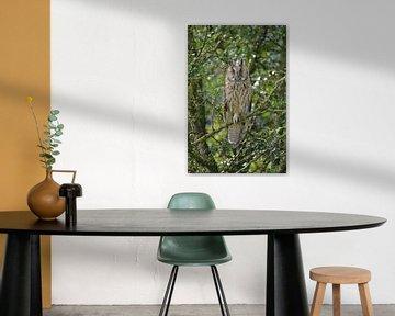 Waldohreule von Bastiaan Willemsen