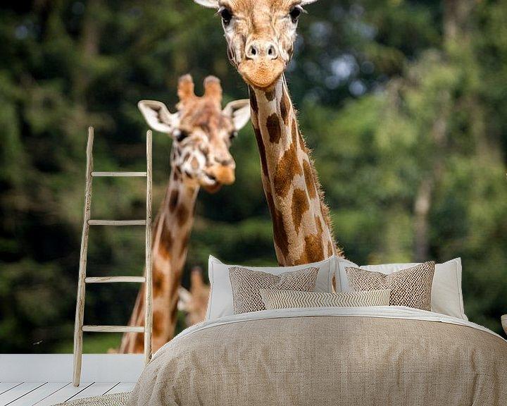 Sfeerimpressie behang: Giraffen trio van Marco Willemsen