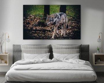 European wolf von Mark Zanderink