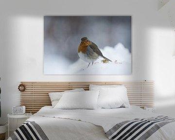Robin bird von Mark Zanderink