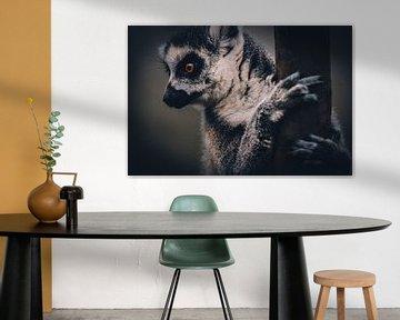 Lemur Monkey von Mark Zanderink