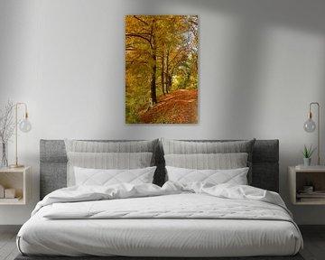 Herfstkleuren in bos