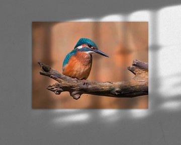IJsvogel von Robert Westerhof