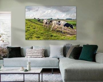 Kühe auf dem Weg zum Melkstand von Ruud Morijn