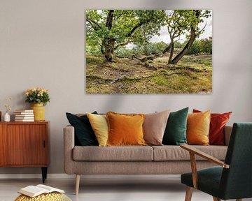 Grillig gevormde bomen van Ruud Morijn