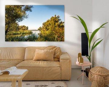 Doorkijkje in de Biesbosch von Ruud Morijn