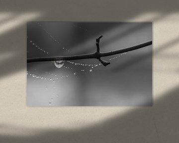 Drops van Foto Amsterdam / Peter Bartelings