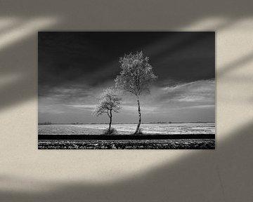 Trees #1 von Anne Koop