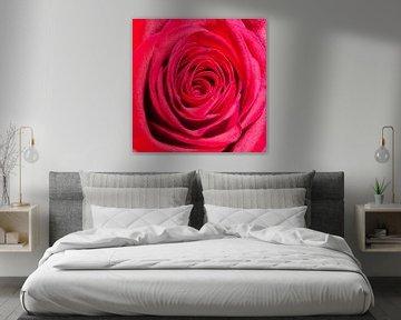 Rote Rose von Gert Hilbink