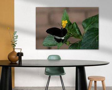 Vlinder von Fotografiemg