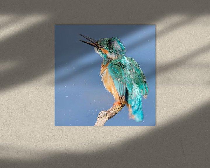 Sfeerimpressie: Vogels | IJsvogel schudt de veren van Servan Ott