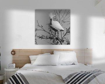 Vögel | Punky  Löffler - Schwarz-Weiß von Servan Ott