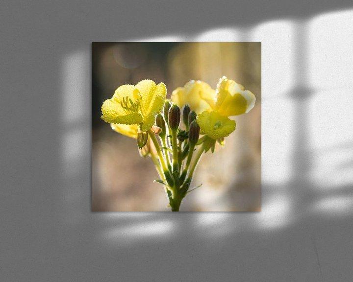 Sfeerimpressie: Bloemen   Teunisbloem in ochtenddauw van Servan Ott