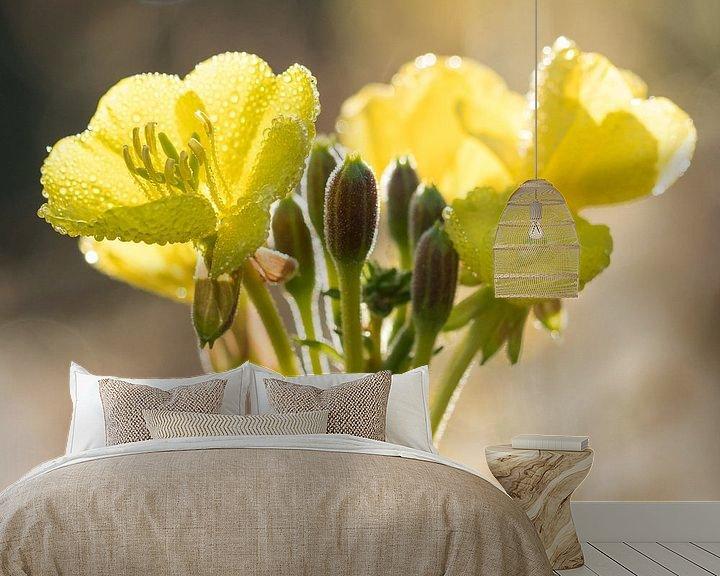 Sfeerimpressie behang: Bloemen   Teunisbloem in ochtenddauw van Servan Ott