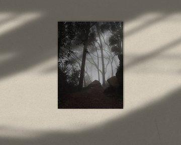 Mysterie in de bossen van Sintra nabij Lissabon von Nadine Geerinck