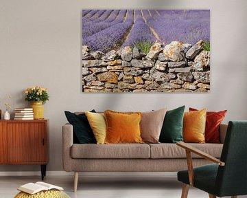 Mur de lavandes von gerald chapert