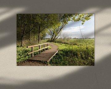 Wandelpad met bruggetje  in Alblasserbos van Beeldbank Alblasserwaard