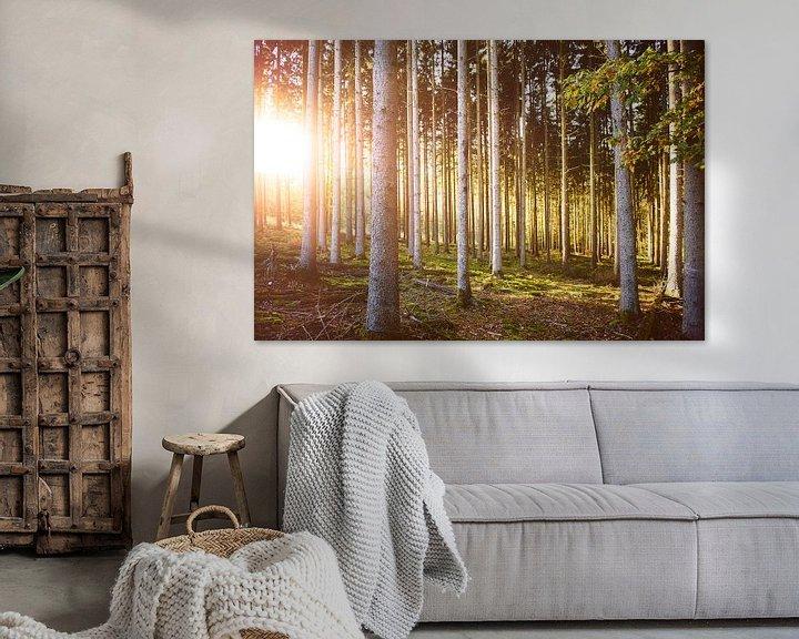 Sfeerimpressie: Herfstkleuren in het bos van Nick van Dijk