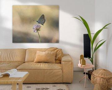 Icarusvlinder von Nathalie Jongedijk