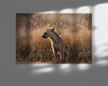 Hyena in de zon van Stephan Petersen