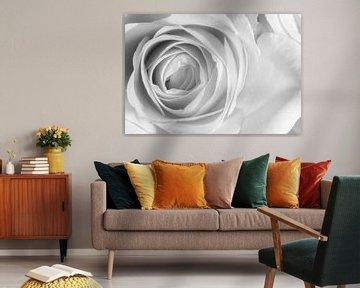 Nahaufnahme einer Rose in Schwarz und Weiß von Marc Goldman