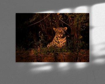 Jaguar in het avondlicht van Leon Doorn