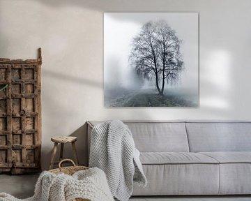Berk in de mist van Lia Lavoir