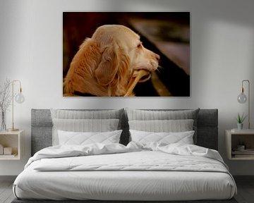 Leiter der Labrador Retriever (Hunderasse) von UN fotografie