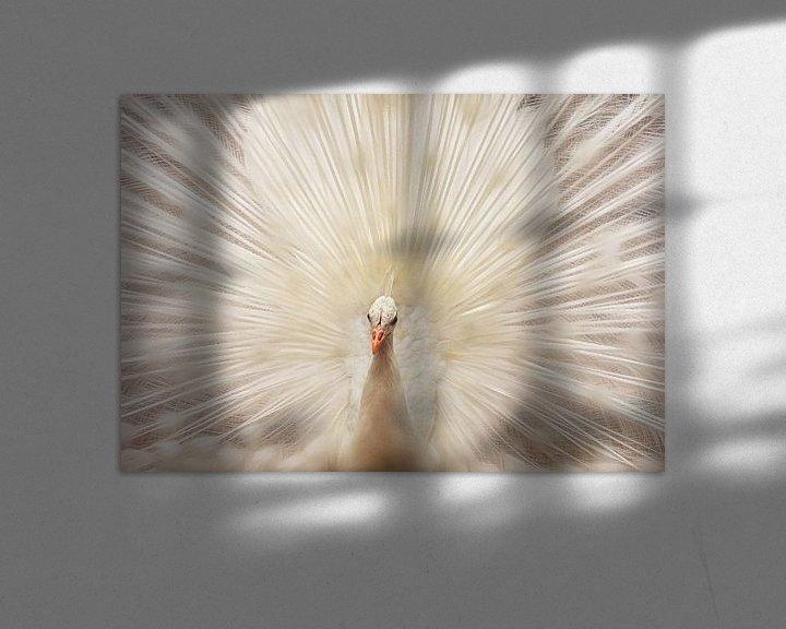 Sfeerimpressie: Witte pauw met verenpracht van Marcel van Balken