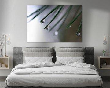 Abstract Nature--Raindrop(s) on Leafs-001 sur Katja Goede