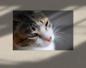 Katze von Sabri Ismail