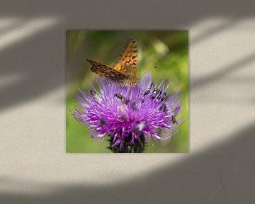 Vlinder op distelbloem von Karin de Jonge