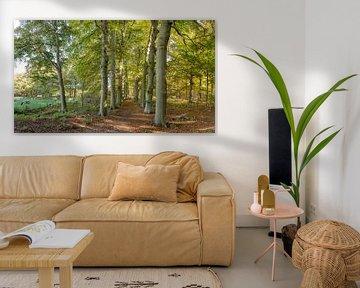Holzweg in den Herbstfarben, Landgut, s-Graveland, Noord-Holland,, die Niederlande von Rene van der Meer