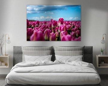 Tulpen van Evelien Stijf