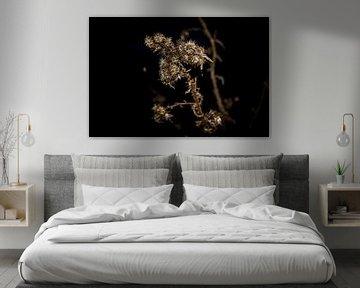 Zwart bloem   von Nooraldeen Sabah