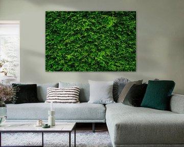 Coniferous design