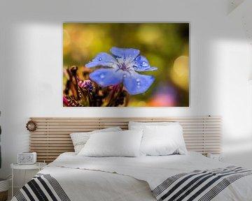 Blauw bloemetje met dauw von Zsa Zsa Faes