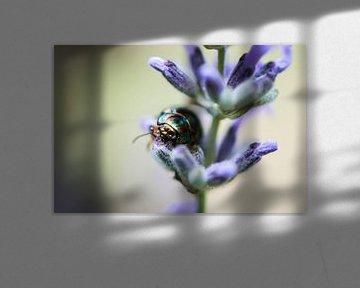 Lavendel & kever von Zsa Zsa Faes