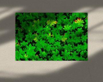 Hardy Geranium Leaves