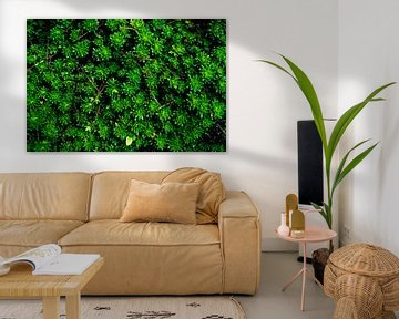 A Green Succulent Carpet