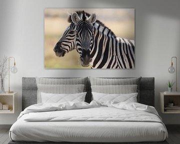 Zebra von Reinier Snijders